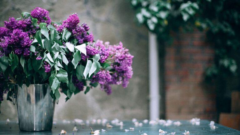 vazo çiçek